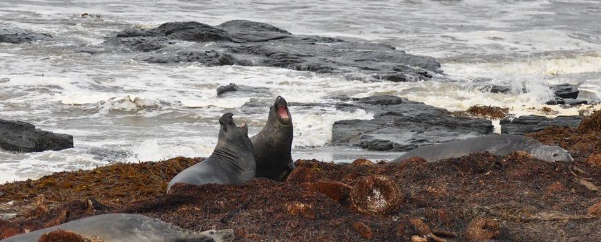 Wild about falkands- Falkland islands wildlife guide
