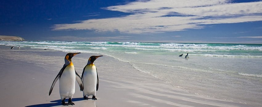 Foray into the Falklands: A complete itinerary