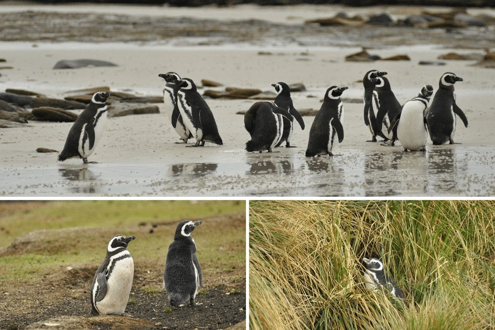 Wild About the Falklands – Falkland Islands Wildlife Guide