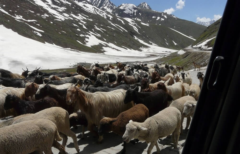 A roadtrip of a lifetime- Srinagar to Leh