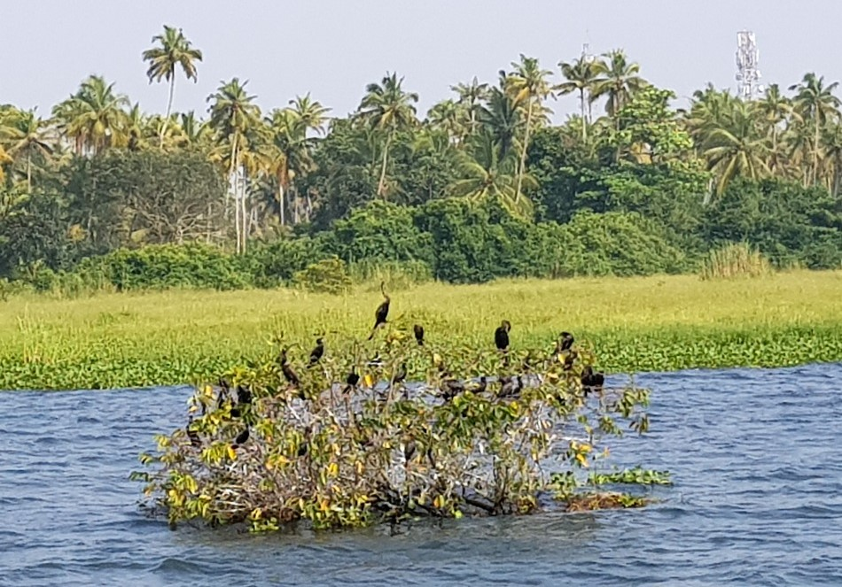 Cruising with Spice Routes on Kerala's Backwaters