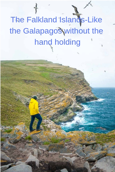 The Falkland Islands-Like the Galapagos without the hand holding