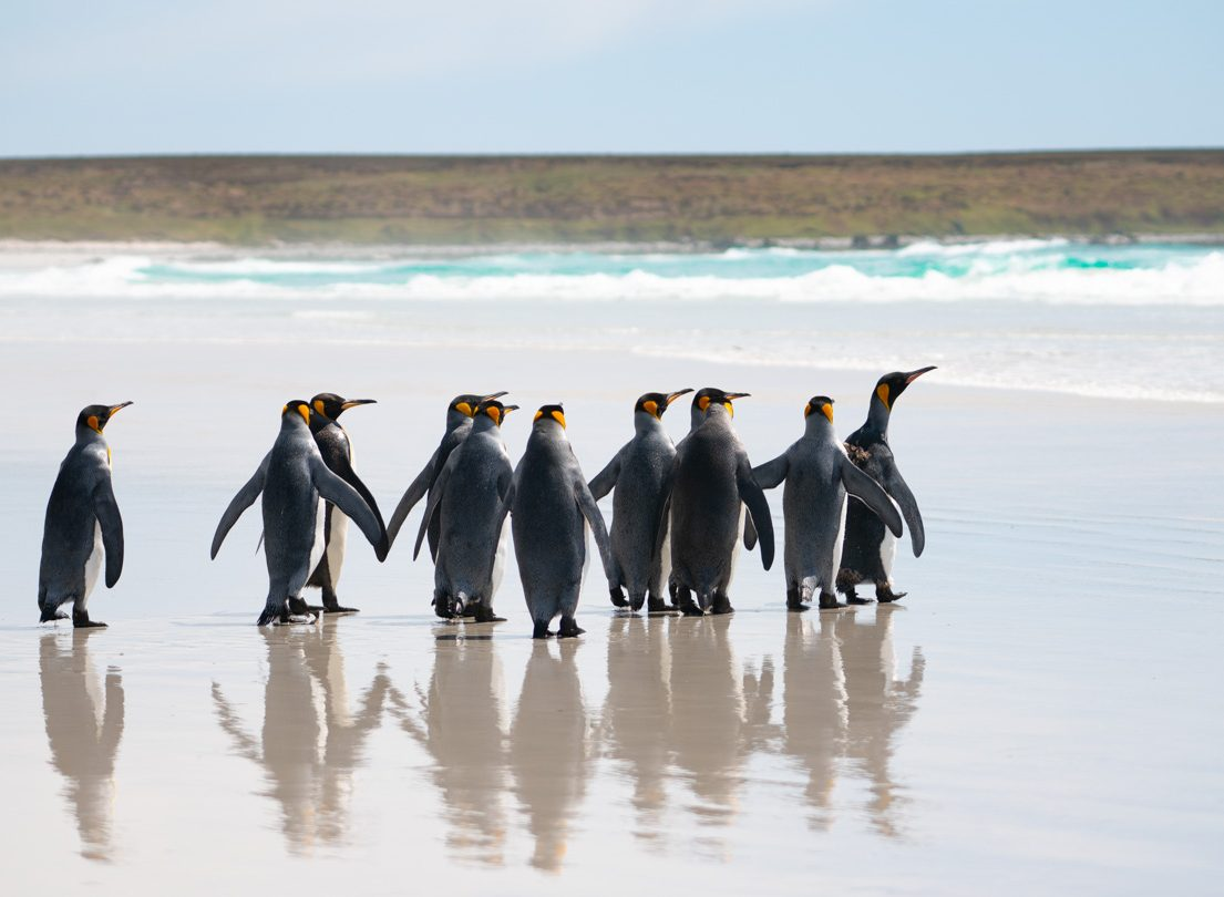 """The Falkland Islands: """"Like the Galapagos without the hand-holding"""""""