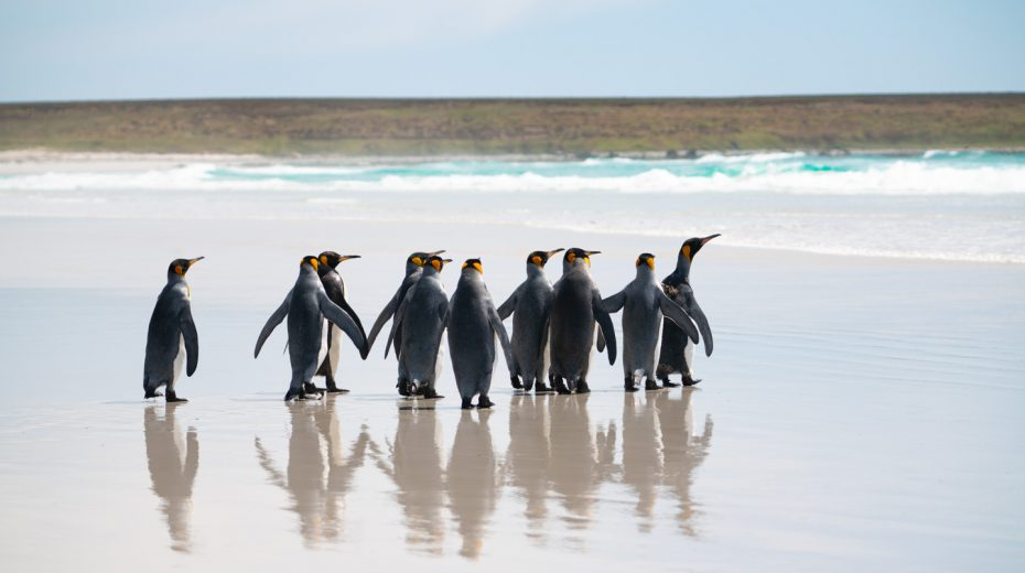 "The Falkland Islands: ""Like the Galapagos without the hand-holding"""